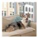 Image 3 - Collier anti-aboiement rechargeable automatique pour petit chien Lite Petsafe