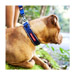 Image 2 - Collier Ezydog Néo-Classic pour chien