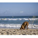 Image 3 - Collier Ezydog Néo-Classic pour chien