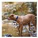 Image 4 - Collier Ezydog Néo-Classic pour chien