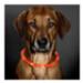 Image 1 - Collier lumineux Visio Light à Led pour chien