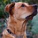 Image 3 - Collier Neck-Tech Fun Inox pour chien