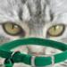 Image 1 - Collier nylon élastique pour chat