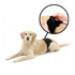 Image 4 - Culotte d'incontinence et fuite urinaire pour chien mâle
