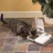 Image 3 - Distributeur automatique de nourriture pour petit chien et chat
