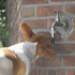 Image 3 - Distributeur d'eau à pipette Autoflot pour chien