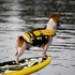 Image 3 - Gilet de sauvetage Ezydog DFD pour chien