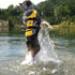 Image 4 - Gilet de sauvetage Ezydog DFD pour chien
