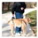 Image 2 - Harnais AidDog™ pour aide à la mobilité du chien âgé et handicapé