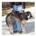 Image 3 - Harnais AidDog™ pour aide à la mobilité du chien âgé et handicapé