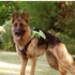 Image 10 - Harnais d'assistance Kn'1 Active Grip pour chien