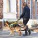 Image 6 - Harnais DoGuide pour chien d'aveugle malvoyant et d'assistance