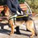 Image 7 - Harnais DoGuide pour chien d'aveugle malvoyant et d'assistance