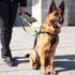 Image 8 - Harnais DoGuide pour chien d'aveugle malvoyant et d'assistance