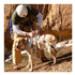 Image 2 - Harnais baudrier Doubleback Ruffwear pour chien sportif
