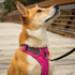 Image 8 - Harnais Ruffwear Front Range de sport et promenade pour chien