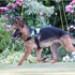 Image 5 - Harnais Kn'1 Active Speed pour chien sportif