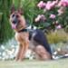 Image 6 - Harnais Kn'1 Active Speed pour chien sportif