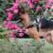 Image 7 - Harnais Kn'1 Active Speed pour chien sportif
