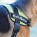 Image 9 - Harnais Kn'1 Active Speed pour chien sportif