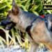Image 12 - Harnais multifonction Kn'1 Active Drive pour chien
