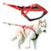 Image 2 - Harnais Neewa Racing H-Back pour sport de trait avec chien