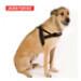 Image 6 - Harnais Norvégien Ezydog Quick Fit pour chien