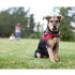 Image 8 - Harnais Norvégien Ezydog Quick Fit pour chien