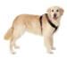 Image 9 - Harnais sport cross TXArtSportiv pour cani-rando et cani-jogging