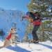 Image 7 - Harnais Web Master Pro pour chien de travail