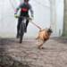 Image 7 - Harnais X-Back Kn'1 Powerful™ pour canicross, bikejoring et skijoring avec chien