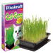 Image 1 - Herbe Cat-Gras pour chat