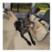 Image 1 - Housse de protection hamac pour la voiture Wander Hammock