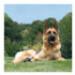 Image 2 - Jeu caoutchouc aéroballe pour chien