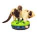 Image 2 - Jeu Cat Track pour chat