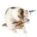 Image 4 - Jeu éducatif pour chat Raptor
