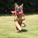 Image 2 - Jeu JW Megalast long dog sonore pour chien
