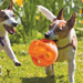 Image 2 - Jeu KongJumbler Ball en élastomère pour chien