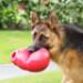 Image 5 - Jeu multi-boule ultra résistant KONG Bounzer pour chien