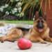 Image 6 - Jeu multi-boule ultra résistant KONG Bounzer pour chien