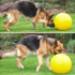 Image 5 - Jolly Ball Push-N-Play jeu de boule pour chien