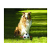 Image 2 - Ballon de foot MatchBall avec poignée pour chien