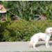 Image 6 - Laisse à enrouleur WaterWalker pour chien et chat