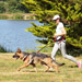 Image 5 - Laisse amortisseur canicross Crolargue pour 1 chien de moyenne ou grande taille
