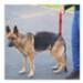 Image 2 - Laisse baudrier Updog™ soutien à la mobilité du chien
