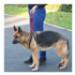 Image 3 - Laisse baudrier Updog™ soutien à la mobilité du chien