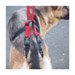 Image 4 - Laisse baudrier Updog™ soutien à la mobilité du chien