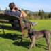 Image 3 - Laisse bracelet à enrouleur Lishinu  pour chien et chat