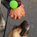 Image 7 - Laisse bracelet à enrouleur Lishinu  pour chien et chat