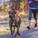 Image 10 - Laisse ceinture extensible Roamer pour chien Ruffwear